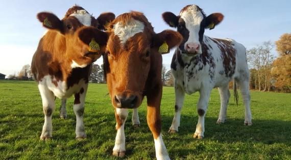 Erve Sniedersboer: heerlijke verhalen over het boerenleven