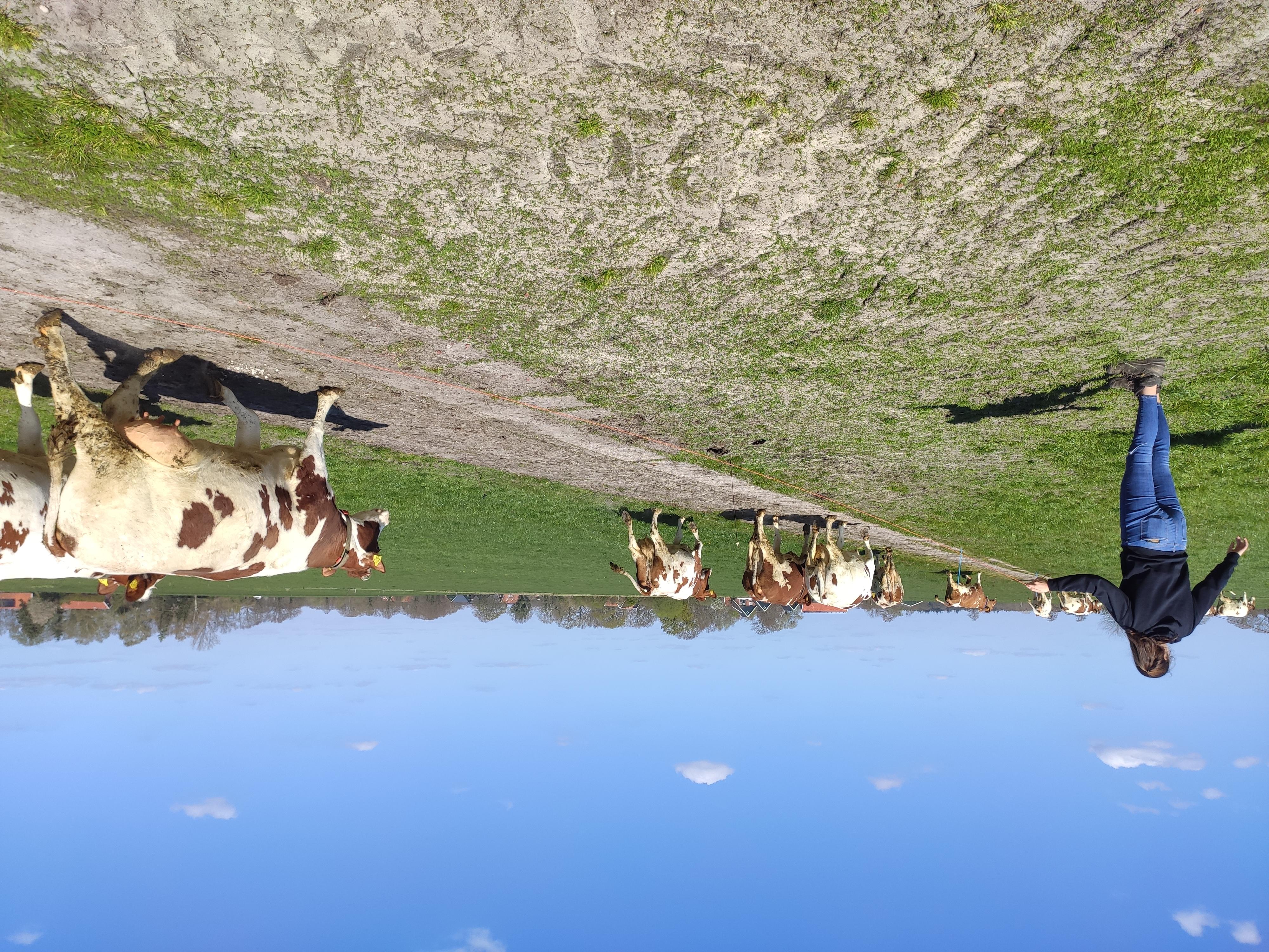 Column in vakblad de Boerderij: De koeien gaan naar buiten