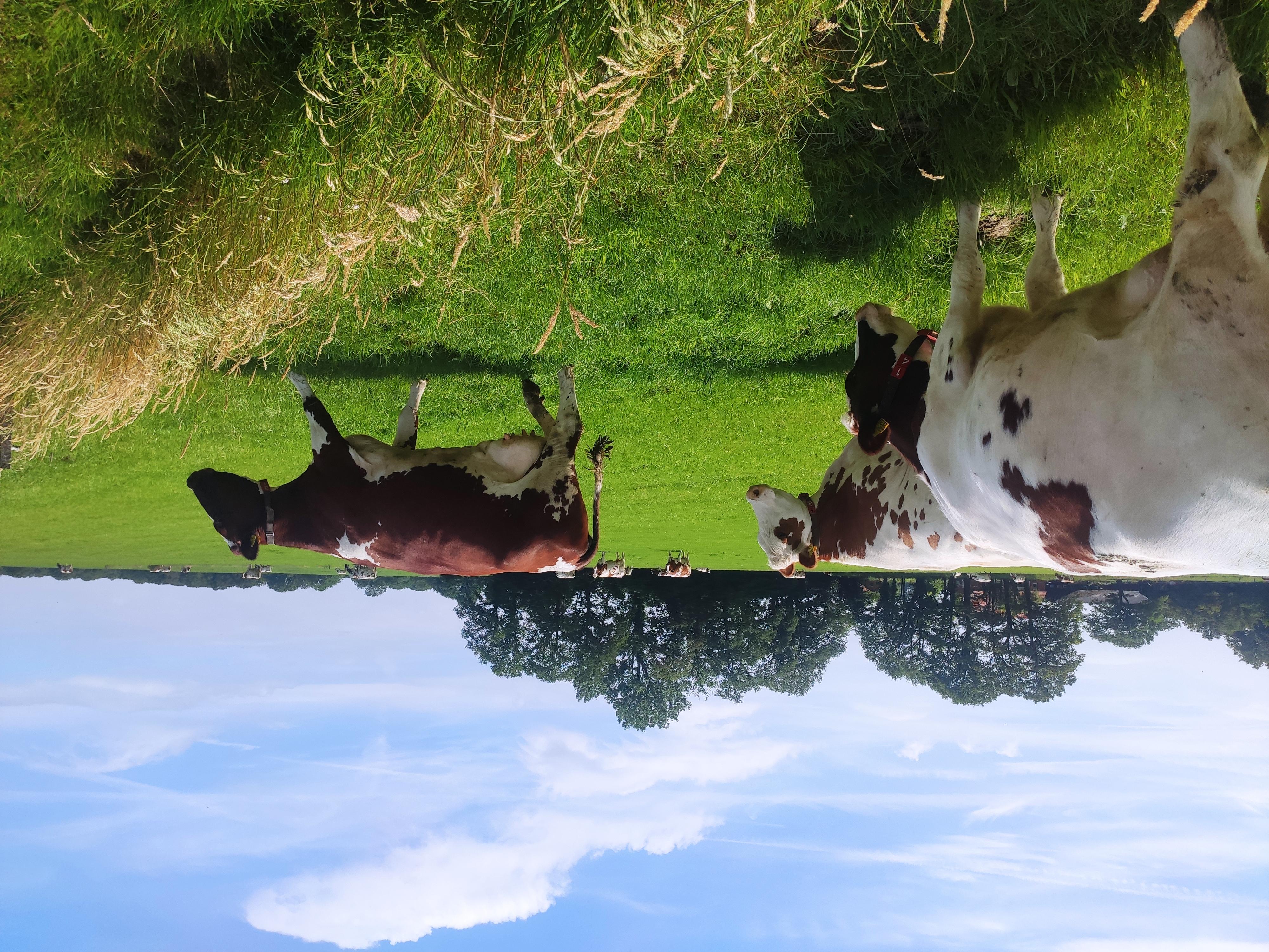 Column: 10.000 liter vet en eiwit koe